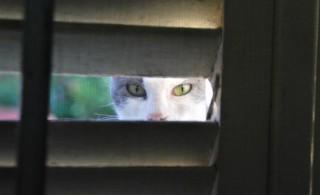 Gato Andaluz