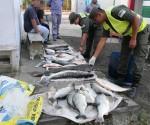 Gendarmeria pescado