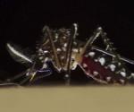 Dengue_Zika