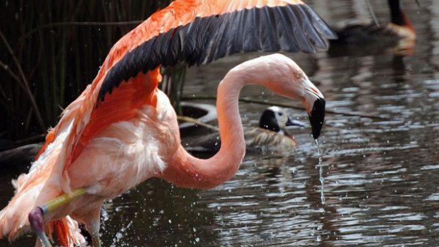 http://www.enlacecritico.com/wp-content/uploads/2020/05/rescate-animales2_658x400-640x360.jpg