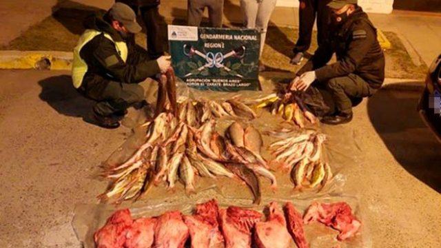 https://www.enlacecritico.com/wp-content/uploads/2021/06/Incautan-79-pescados-y-animales-faenados-en-un-control-vial-en-Zarate-3_658x400-640x360.jpeg